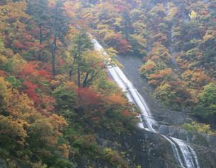 紅葉の白糸の滝の写真素材 [FYI03269324]