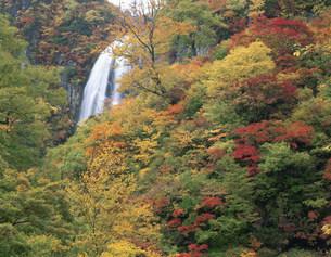 紅葉の安の滝の写真素材 [FYI03269326]