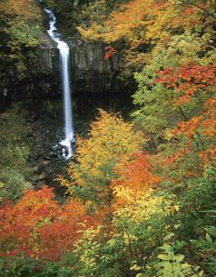 紅葉の曽利の滝の写真素材 [FYI03269327]