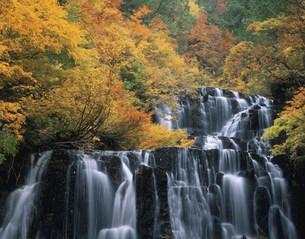 紅葉の立又渓谷 二の滝の写真素材 [FYI03269331]