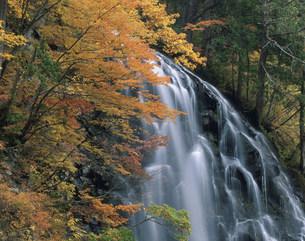 紅葉の立又渓谷 一の滝の写真素材 [FYI03269332]