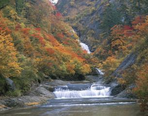 紅葉の桃洞渓谷の写真素材 [FYI03269333]