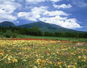 錦玉園より望むヘメロカリス畑と浅間山の写真素材 [FYI03269541]