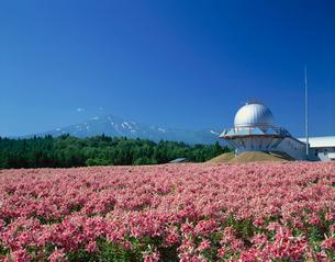 ユリ畑と天文ドームと鳥海山の写真素材 [FYI03269732]