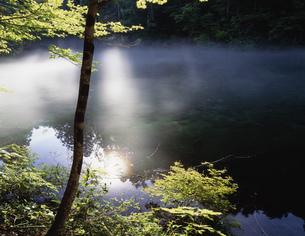 朝霧漂う竜ヶ窪の湧水池の写真素材 [FYI03269752]