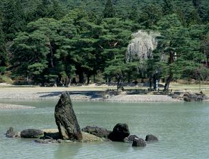 しだれ桜咲く毛越寺庭園の写真素材 [FYI03270228]