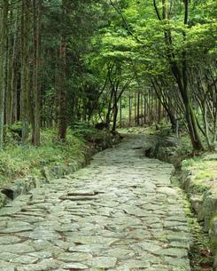 旧中山道の石畳の道の写真素材 [FYI03270248]