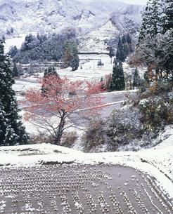 紅葉の木と初雪の山村の写真素材 [FYI03270268]