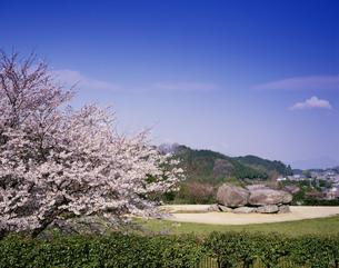 桜咲く春の石舞台古墳の写真素材 [FYI03270429]