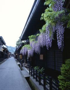 藤の花と家並みの写真素材 [FYI03270559]