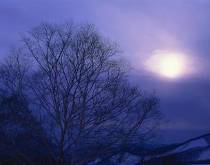 樹と太陽 十和田の写真素材 [FYI03270657]
