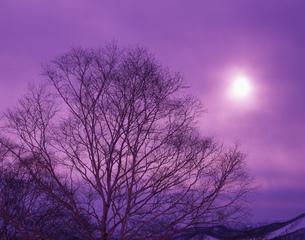 樹と太陽の写真素材 [FYI03270665]