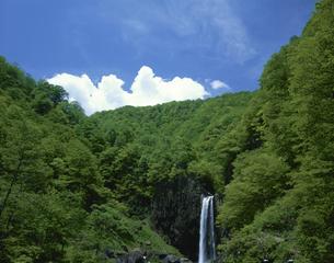 苗名滝  5月  新潟県の写真素材 [FYI03270793]