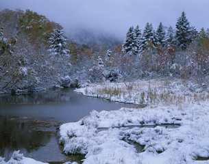 雪積もる木々と湿原 八甲田の写真素材 [FYI03270814]