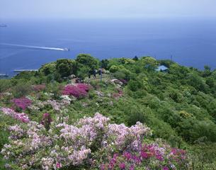 ツツジ咲く五本松公園 美保関町の写真素材 [FYI03270871]