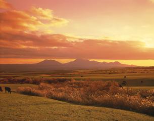 牧場と阿蘇連山の夕景 久住高原の写真素材 [FYI03270876]