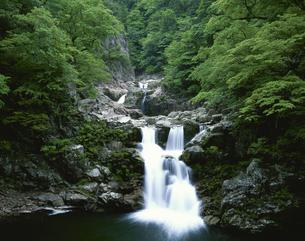 新緑の三段滝 三段峡戸河内町の写真素材 [FYI03270879]