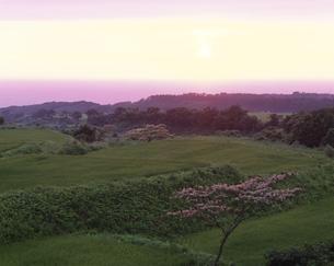 稲田と日本海夕景 象潟町 7月 秋田県の写真素材 [FYI03270883]