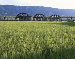稲田と三連水車 朝倉町 7月 福岡県の写真素材 [FYI03270889]