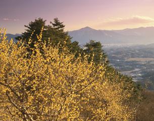 臘梅と山並夕景 宝登山 長瀞町の写真素材 [FYI03270890]