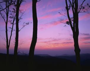 ブナの木々と夕焼け空 八甲田  青森県の写真素材 [FYI03270894]