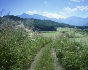 ススキの道とソバ畑 下郷町9月 福島県の写真素材 [FYI03270900]