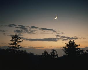 夕日と木々 志賀高原 長野県の写真素材 [FYI03270901]