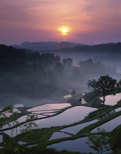 朝霧の山里と棚田 松代町 新潟県の写真素材 [FYI03270902]