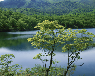 新緑の須川湖 東成瀬村 5月 秋田県の写真素材 [FYI03270907]