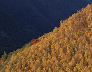 夕映えの秋の山 乗鞍高原10月 長野県の写真素材 [FYI03270914]