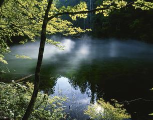 朝霧漂う竜ヶ窪の湧水池 津南町 新潟県の写真素材 [FYI03270917]