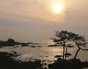光る日本海と松の夕景 福井市 福井県の写真素材 [FYI03270930]