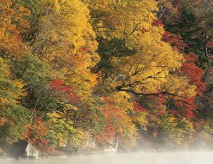 紅葉の木々と湖 日光 中禅寺湖 栃木県の写真素材 [FYI03270932]