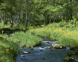 初夏の檜原川と木立 磐梯高原 福島県の写真素材 [FYI03270933]