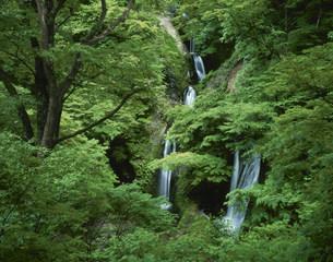 新緑の十二滝の写真素材 [FYI03270938]
