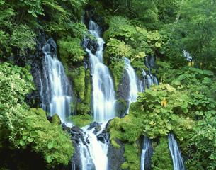 夏の吐竜の滝 大泉村 8月 山梨県の写真素材 [FYI03270942]