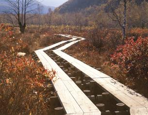 秋の湿原と木道 乗鞍高原10月 長野県の写真素材 [FYI03270943]