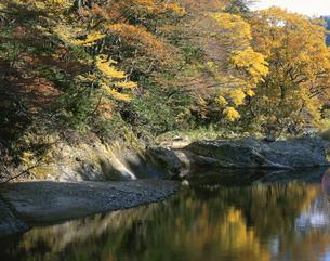 秋の薬研渓流 大畑町 青森県の写真素材 [FYI03270949]