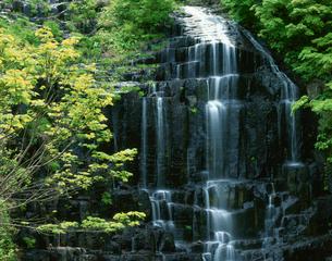 新緑の桧山の滝 秋田県の写真素材 [FYI03270956]