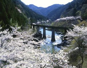 桜咲く飛騨川と鉄橋の写真素材 [FYI03270962]
