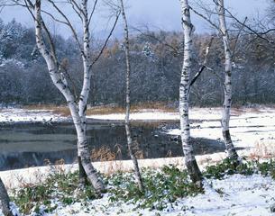 雪の小鳥ヶ池 戸隠高原の写真素材 [FYI03270966]