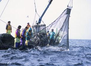 シャケ漁の写真素材 [FYI03271378]