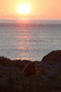 夕日のなかのヒグマの写真素材 [FYI03272777]