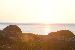夕陽のなかのヒグマの写真素材 [FYI03272787]