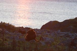 夕陽のなかのヒグマの写真素材 [FYI03272802]