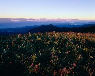 美ヶ原の花畑と北アルプスの朝の写真素材 [FYI03273431]