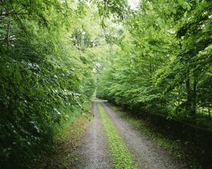 別荘地の道の写真素材 [FYI03273439]