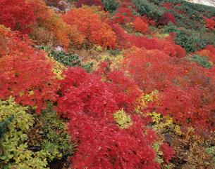 秋色の乗鞍岳の写真素材 [FYI03273551]