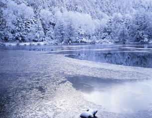 凍る三角(みすみ)池 志賀高原の写真素材 [FYI03273598]