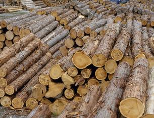 木曽檜貯木場の写真素材 [FYI03273679]